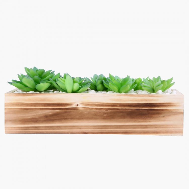 Agaves on Rectangular Pot